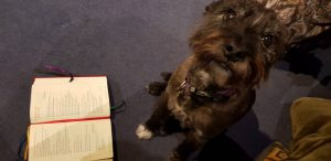 A dog reading a prayer book.